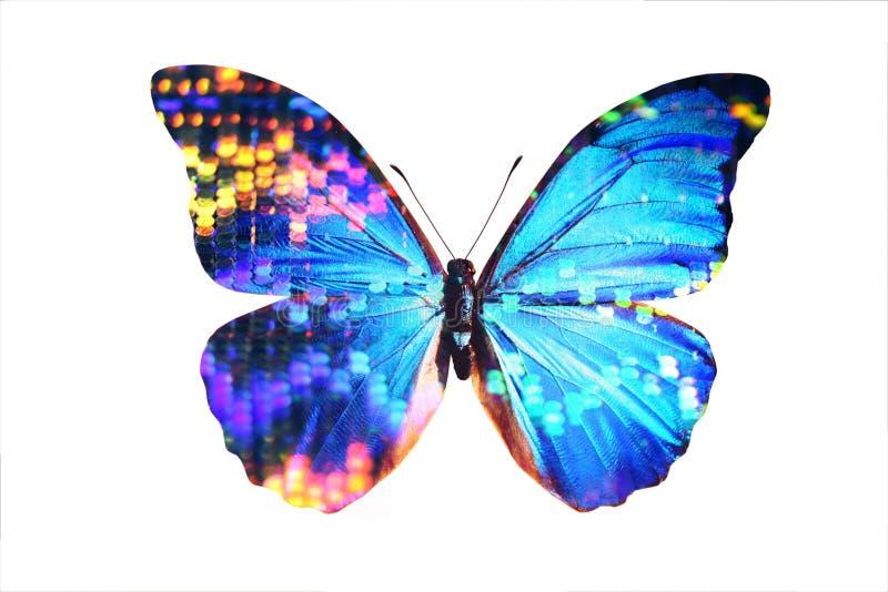 Blauwe Morpho vector illustratie