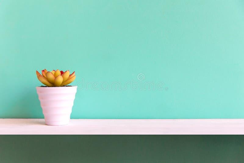 Blauwe muur met cactus op planken wit hout, exemplaarruimte voor tekst royalty-vrije stock foto