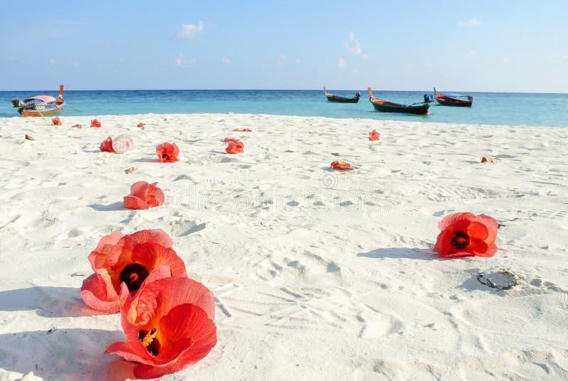 Blauwe overzees, wit zand en rode Hibiscusbloemen royalty-vrije stock foto