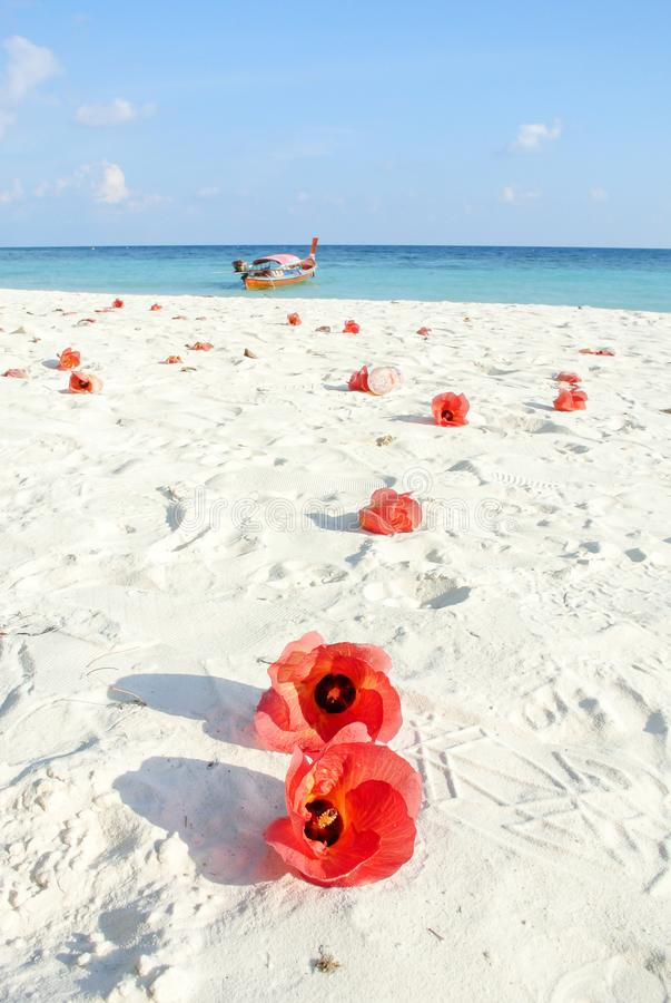 Blauwe overzees, wit zand en rode Hibiscusbloemen royalty-vrije stock afbeeldingen