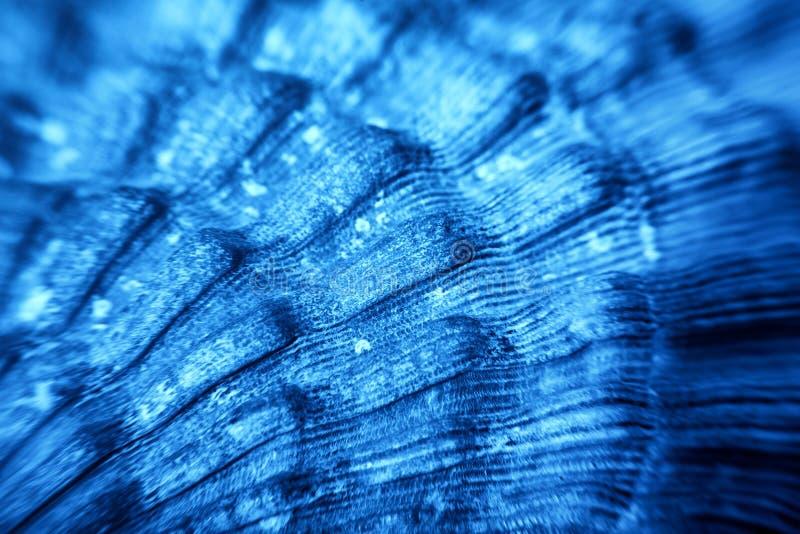 Blauwe Overzeese shell textuur royalty-vrije stock afbeelding