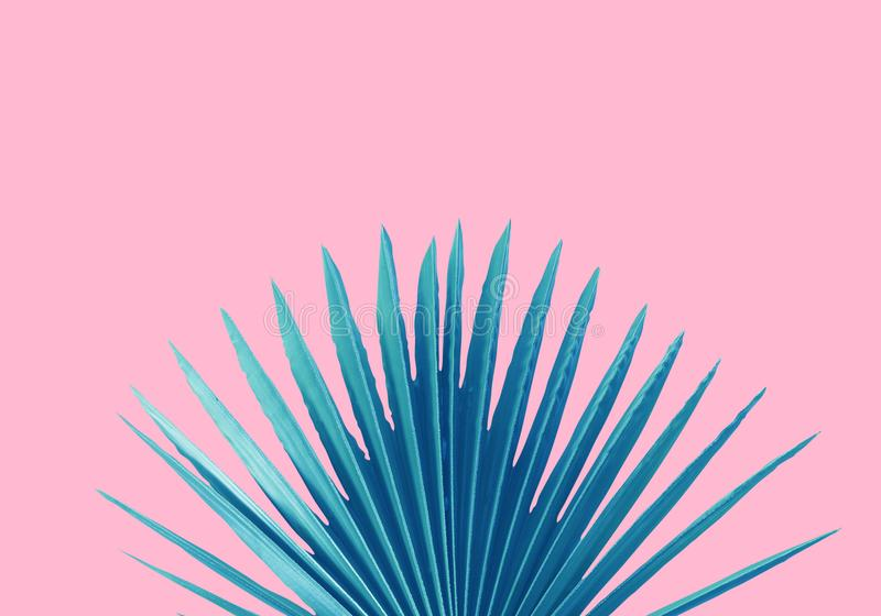 Blauwe Palmblad roze achtergrondconceptenillustratie royalty-vrije illustratie