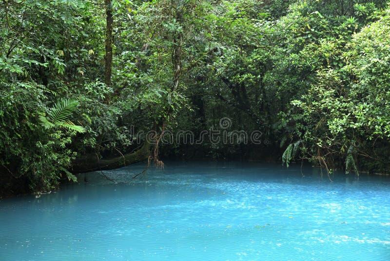 Blauwe rivier in midden van regenwoud royalty-vrije stock fotografie