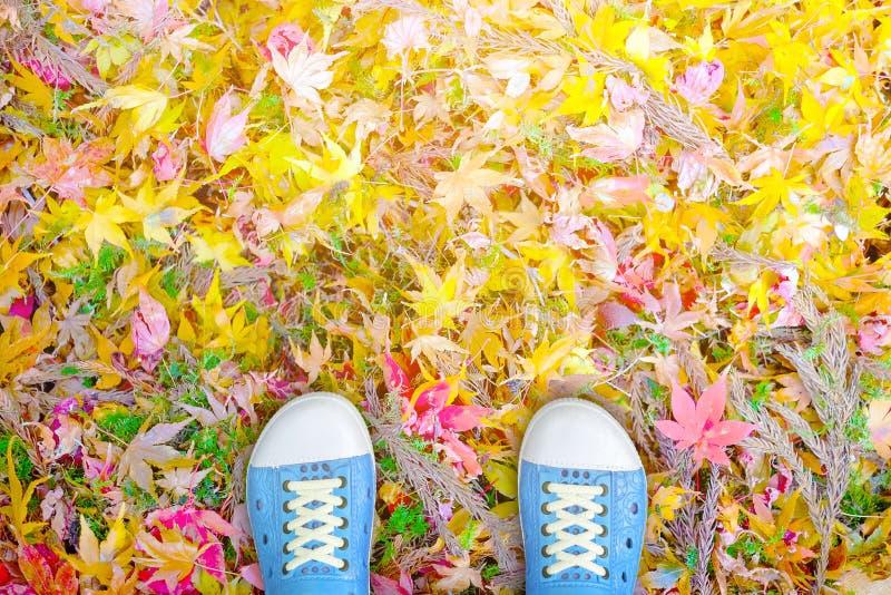 Blauwe schoenen die zich op de kleurrijke bladeren van de de herfstesdoorn bevinden stock fotografie