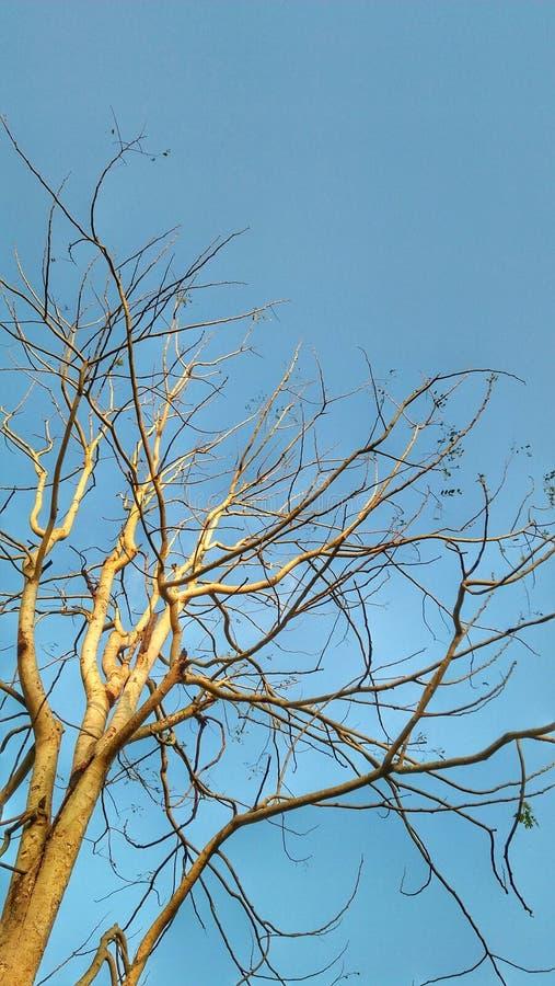 Blauwe sky3334444 royalty-vrije stock afbeelding