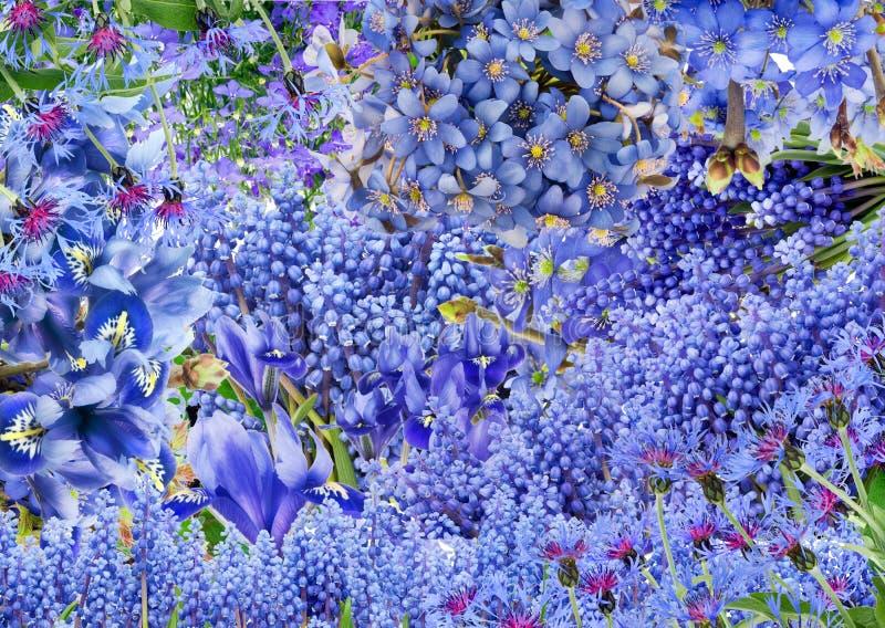 Blauwe slechts bloemen royalty-vrije stock foto