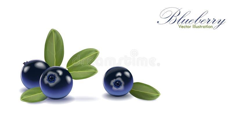Blauwe smakelijke die bosbes met blad op geïsoleerde witte achtergrond wordt geplaatst vector illustratie