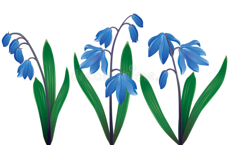 Blauwe sneeuwklokjes stock illustratie