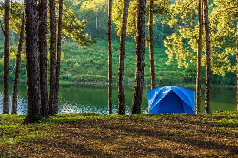 Blauwe tent voor het kamperen in bos van Huai Makhuea Som-reservoir stock fotografie