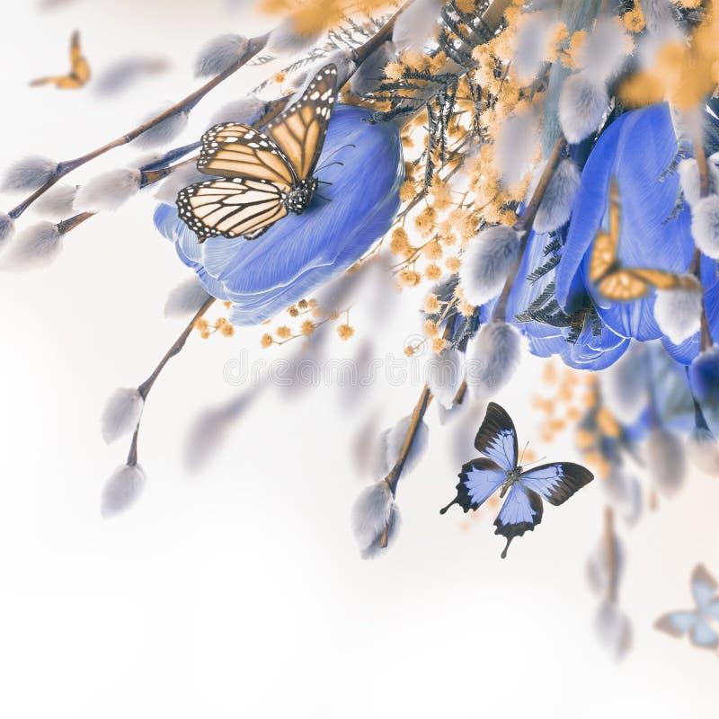 Blauwe tulpen met mimosa royalty-vrije stock foto