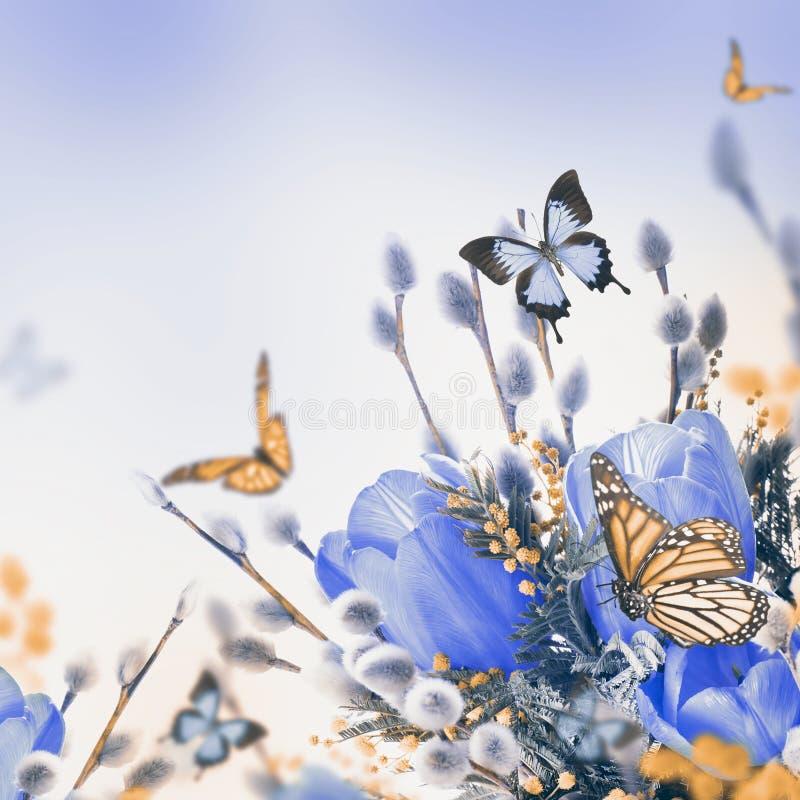 Blauwe tulpen met mimosa royalty-vrije stock foto's
