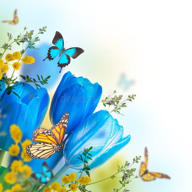 Blauwe tulpen met mimosa en vlinder stock illustratie