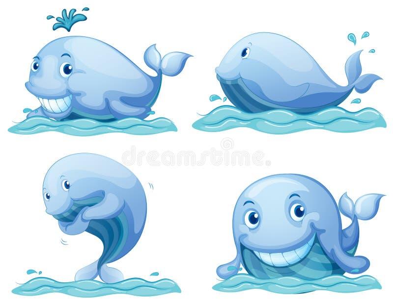 Blauwe vinvissen vector illustratie