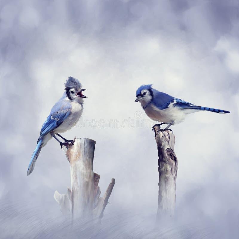 Blauwe Vlaamse gaaivogels stock afbeeldingen