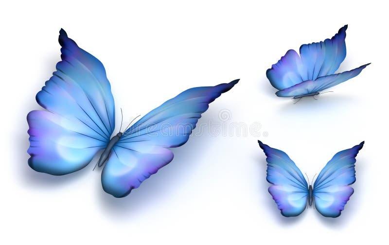 Blauwe vlinder die op wit wordt geïsoleerdb royalty-vrije illustratie