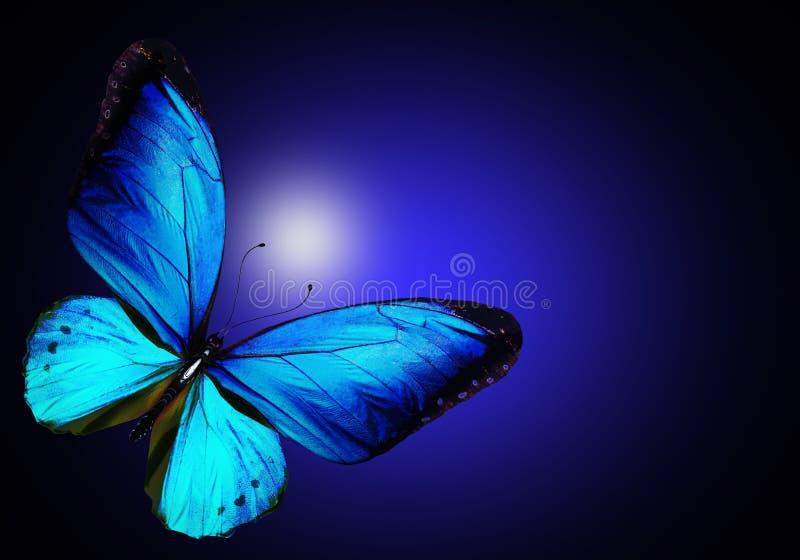 Blauwe vlinder op blauwe achtergrond stock afbeelding