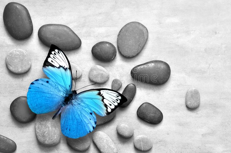 Blauwe vlinder op de grijze achtergrond van de kuuroordsteen royalty-vrije stock afbeeldingen