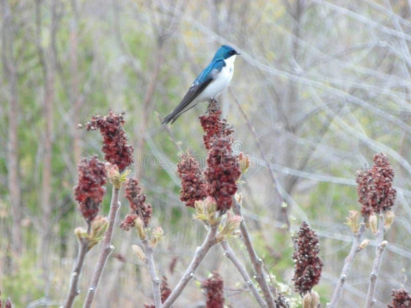 Blauwe Vogel in Aard met Installaties stock afbeeldingen
