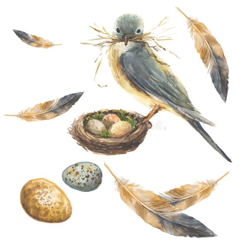 Blauwe vogel op een nest met een grassprietje in zijn bek Twee mooie eieren en veren reeks stock illustratie
