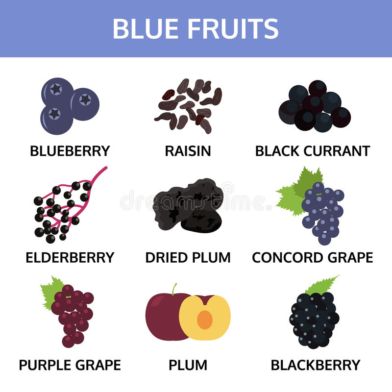 Blauwe vruchten grafische inzamelingsinformatie, voedsel vectorillustratie royalty-vrije illustratie