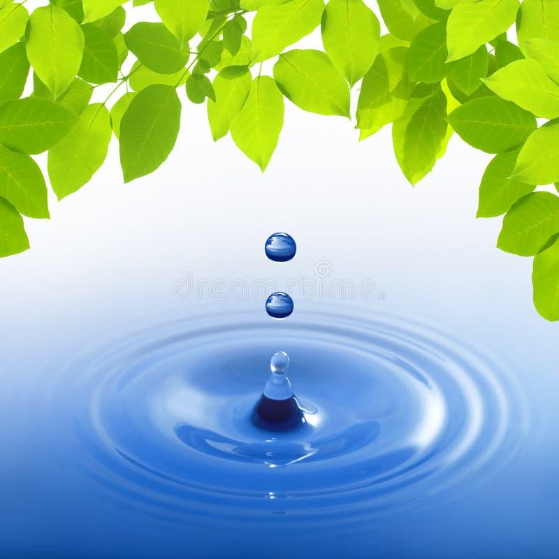 Blauwe waterdaling op bladeren royalty-vrije stock foto