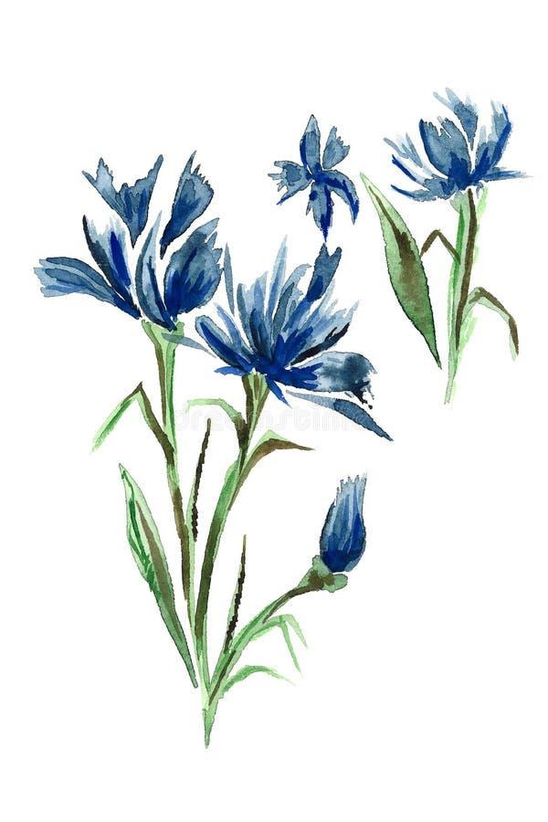 Blauwe weidekorenbloemen stock illustratie