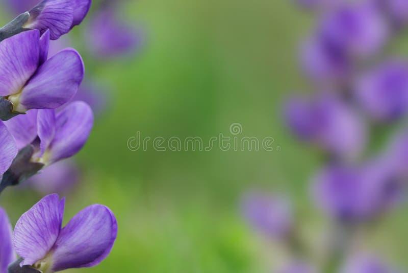 Blauwe wild-indigogrens royalty-vrije stock fotografie