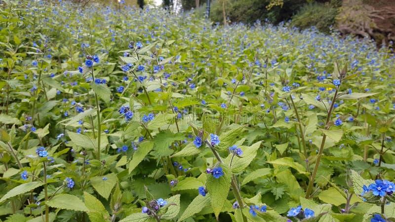 Blauwe wilde bloem stock foto's