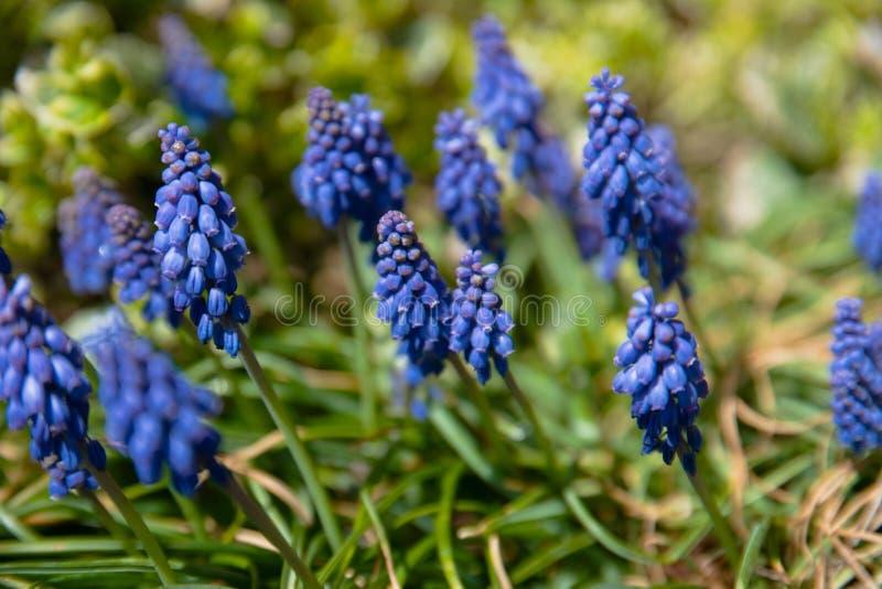 Blauwe wilde bloemen stock foto's