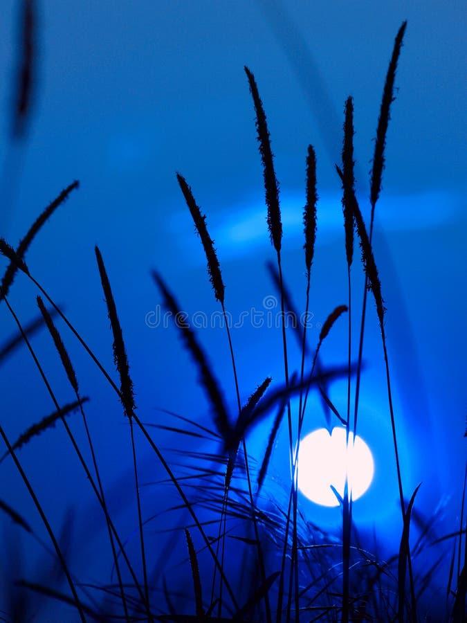 Blauwe zonsondergang stock foto