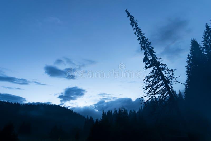 Blauwe zonsondergang in Karpatische Bergen met een hangende boom royalty-vrije stock foto's