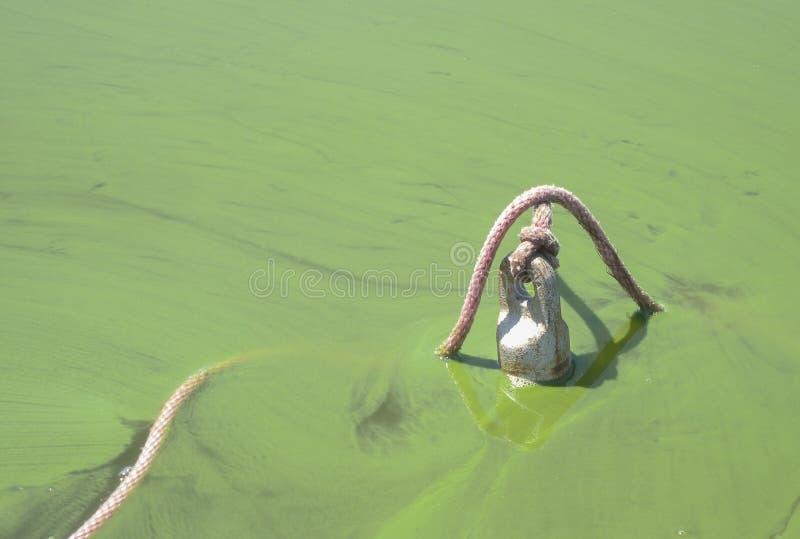 Blauwgroene algenbloei royalty-vrije stock afbeeldingen
