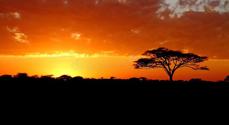 Blazing African Sunset stock image
