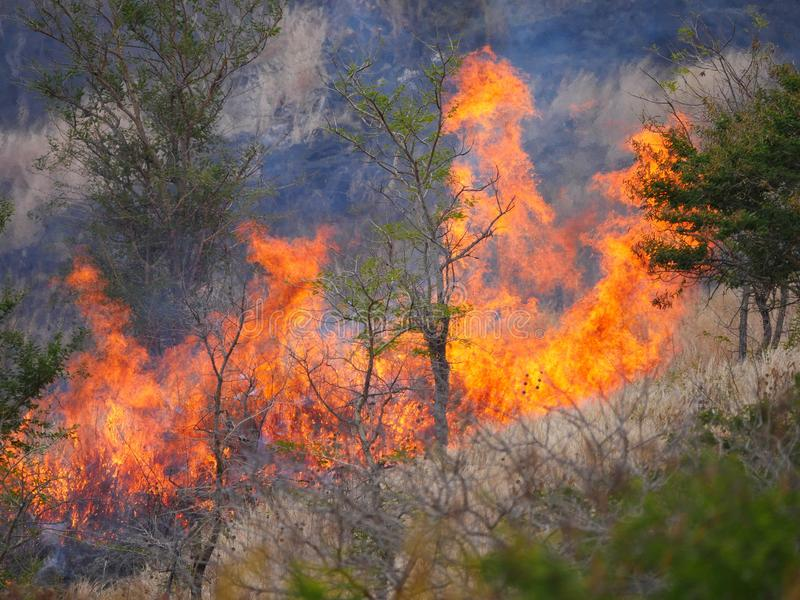 Blazing forest fire. On slope stock photography