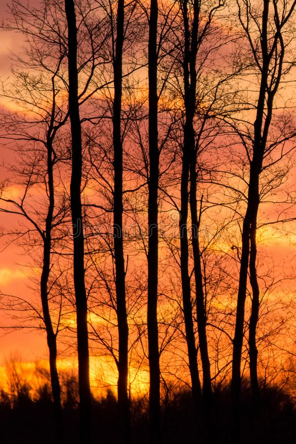 Blazing sunset. Blazing orange sunset through the trees in winter stock photo