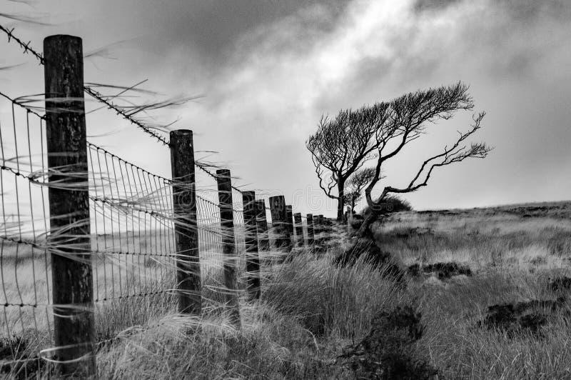 Windy Exmoor stock photos