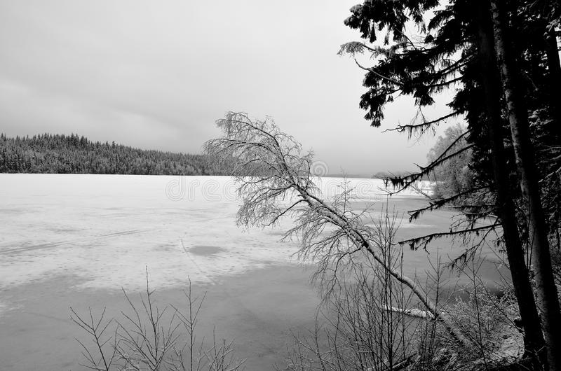 A bleak winters day. A feeling of cold and bleakness on a frozen lake in late winter. Lake is located in the Cariboo region of British Columbia, Canada stock photos