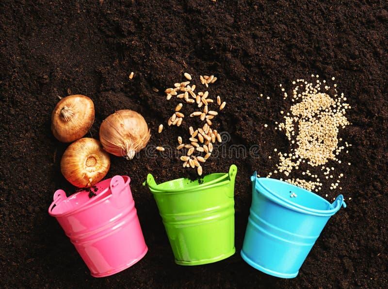 Blecheimer mit Samen und Zwiebel für die Gartenarbeit auf Boden stockbilder