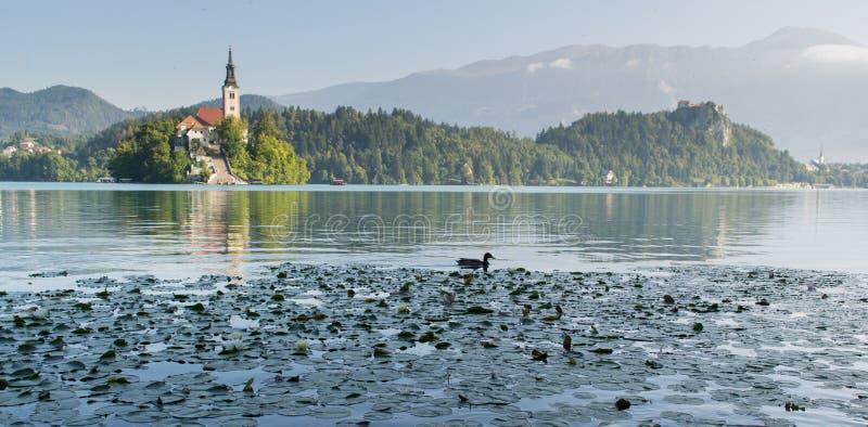 Bled Lake, Slovenia, Europe royalty free stock photos