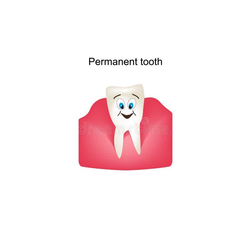 Bleibende Zähne Im Zahnfleisch Kinderkarikaturart Infographics ...