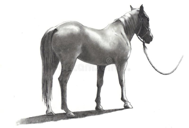 Bleistift-Zeichnung des Pferds mit Zaum und Seil vektor abbildung