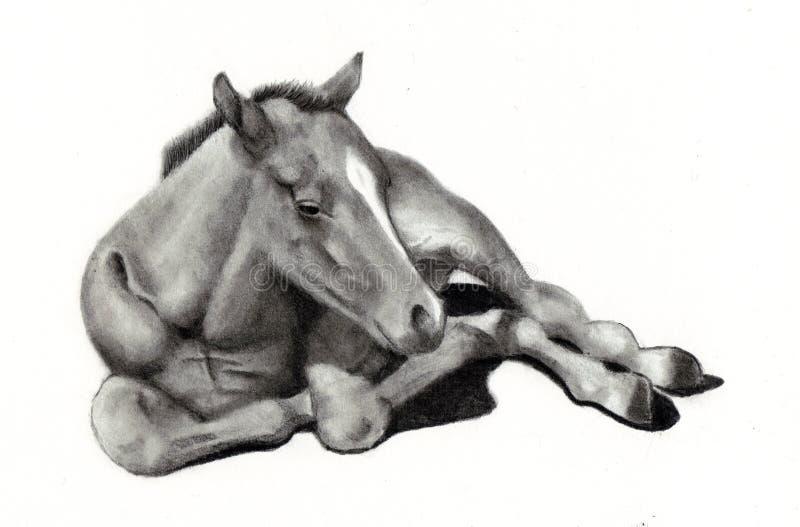 Bleistift-Zeichnung des Schätzchen-Pferds stock abbildung