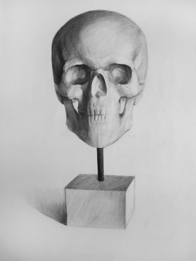 Bleistift-Zeichnung (Schädel, Schädel, Anatomische Zeichnung) Stock ...