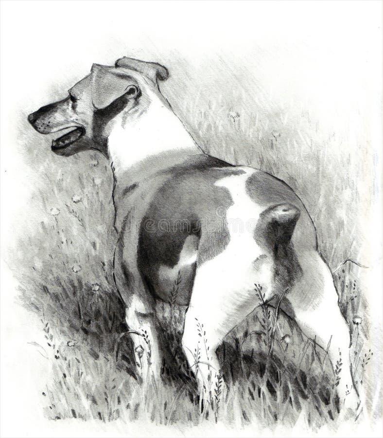 Bleistift-Zeichnung Terrier-Hundes des Jack-Russell lizenzfreie abbildung