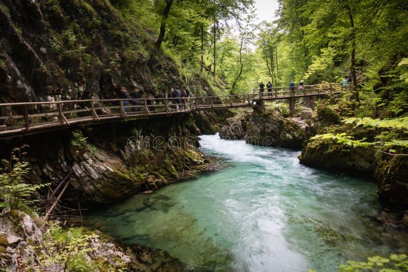 Blejski Vintgar, Slovénie - 18 mai 2019 : touristes photographiant et trimardant sur une passerelle, beau Vintgar scénique guidé image stock