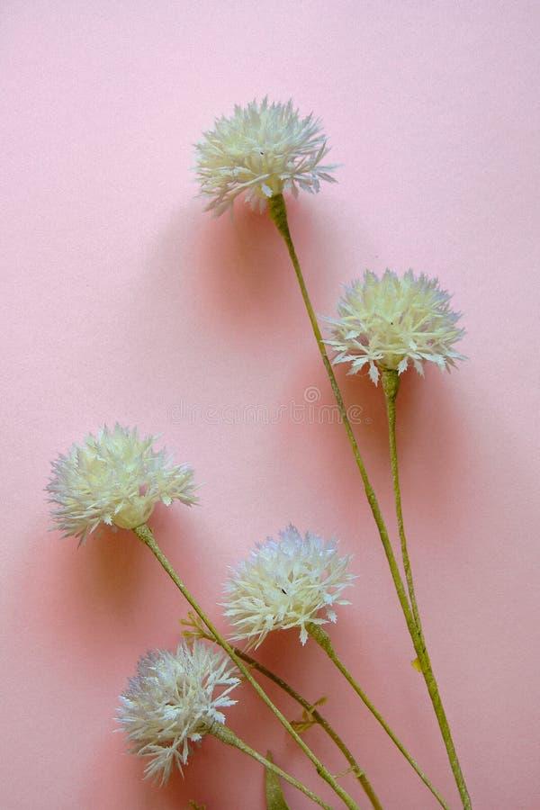 Bleka purpurfärgade lösa blommor mot pastellfärgad rosa bakgrund Lekmanna- l?genhet royaltyfria bilder