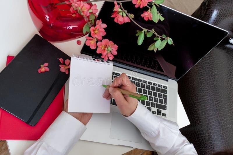 Blekande utrymme för bärbara datorer vårblommor, äppelgren rosa blanksteg arkivbild