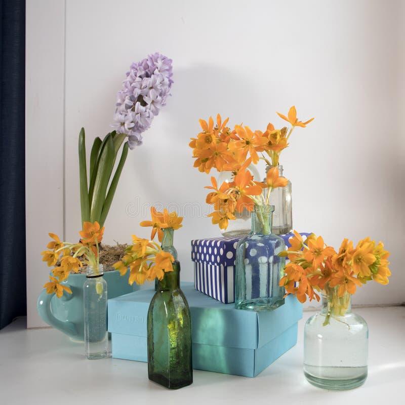Bleke hyacint in blauwe kop en het Bloeien gele Ornithogalum Dubium in een transparante flessen in plaats daarvan vaas stock afbeeldingen