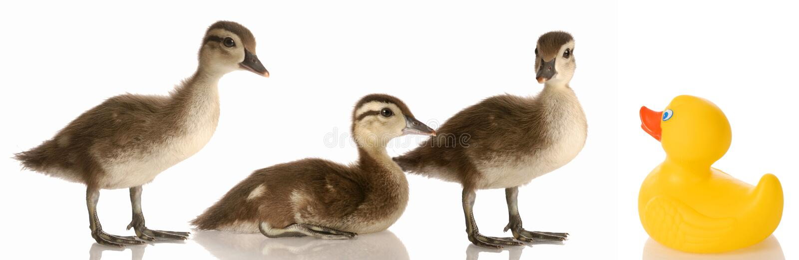 Download Blended family stock image. Image of happy, bird, funny - 10326343