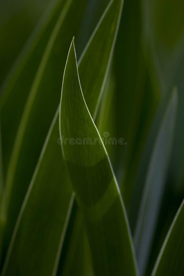 Blenden-Blätter lizenzfreie stockbilder